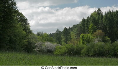 Landscape meadow and forest in spring.