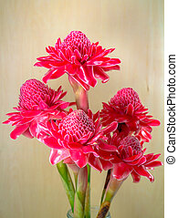 beautiful tropical red ginger flower