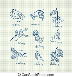 Set of garden and wild hand-drawn berries - Collection of...