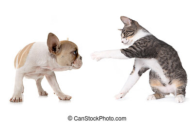 Cute Puppy Dog and Kitten on White - Playful Puppy Dog and...