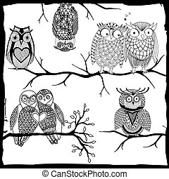 Owls on a branch