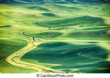 Wheat Fields In The Palouse - A view of a stream bed...