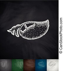 clam icon. Hand drawn vector illustration. Chalkboard Design