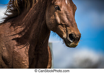 Lovely horse head close-up