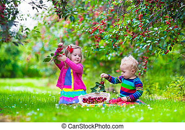 Kids picking cherry on a fruit farm garden - Kids picking...