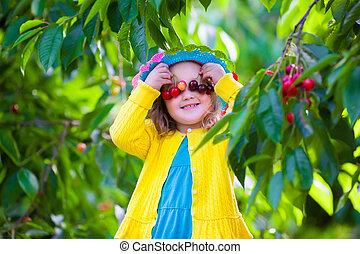Little girl picking fresh cherry on a farm - Kids picking...