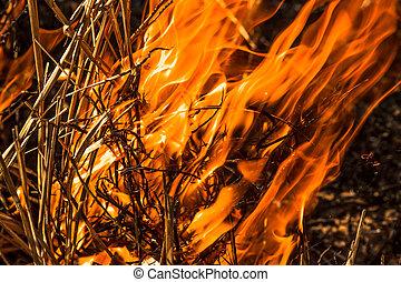 floresta, fogo,
