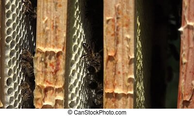 bee on hive frames - Close up of frames and their bees