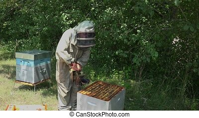 smoking out bees - removal of frames before honey extraction