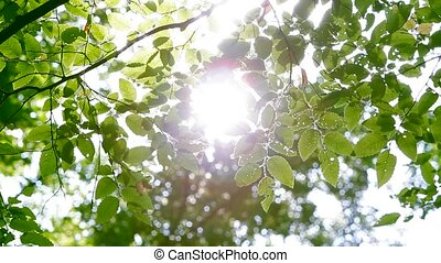 Green Leaves In Forest Sun Shining Through Branches.