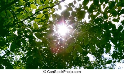 Green Leaf In A Rays Of Sun