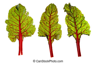 Red Chard Leaves - Three stalks of red chard isolated on...