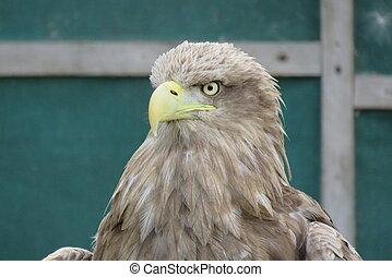 Kestrel at Birds of Prey Centre