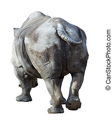 white rhinocerosCeratotherium simum Isolated over white...