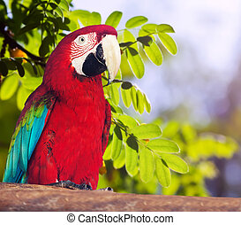 Portrait of Red-and-green Macaw Ara chloropterus in forest...