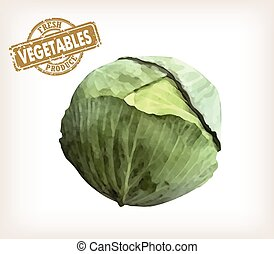 cabbage - Vector color image of an cabbage on a white...