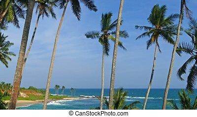 beautiful landscape with sea and coconut palms