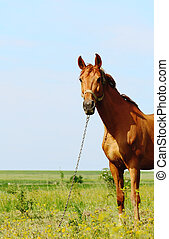 horse standing in field alone, summertime