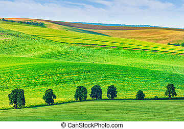 Rolling landscape of South Moravia with trees. - Moravian...