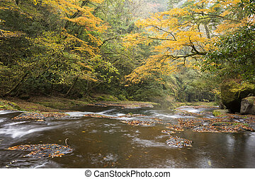 Autumn gentle river - Gentle river flowing in autumn color...