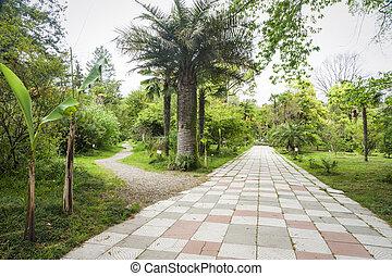 Botanical garden in Sukhumi