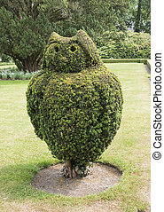 buxus tree pruned as owl - big green buxus tree in english...