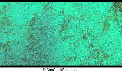 Sea snake on coral reef - Sea snake under water sea coral...