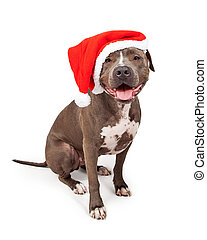 Pit Bull Wearing Christmas Santa Hat - Happy and smiling...