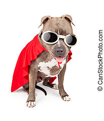 Superhero Dog Wearing Cape and Goggles - Funny Pit Bull dog...