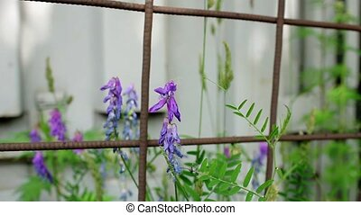 Flowers behind bars - Flowers behind prison bars close to...