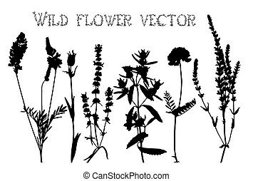 Silhouettes of wild flowers and leaves vector - Set of...