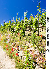 grand cru vineyard, L?Hermitage, Rh?ne-Alpes, France