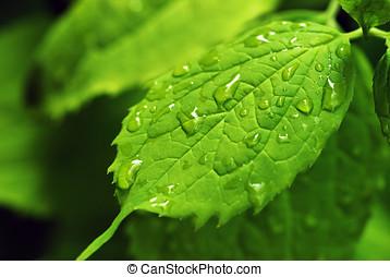 Rain drops on leaf
