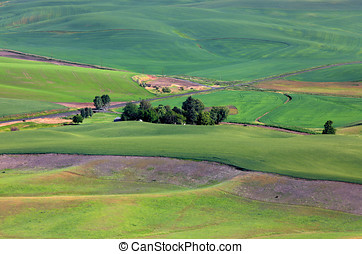 Palouse landscape - Wheat fields on rolling hills from...
