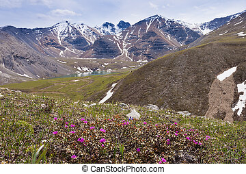 Flower Springs Lake northern Rockies BC Canada - Blooming...