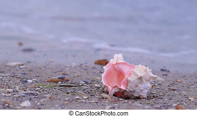 Seashell on the Beach - SeaShell on the Sandy Beach