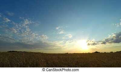 Sunset Sky over a Wheat Field - Sunset Sky Time Lapse over a...