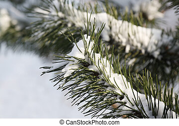 Christmas tree covered with snow - fresh snow on tree...
