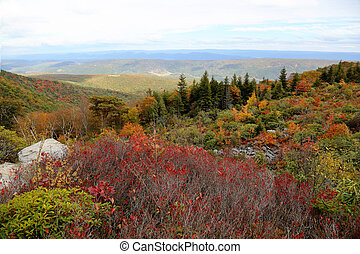 Dolly Sods West Virginia - Beautiful Hills of Dolly Sods of...