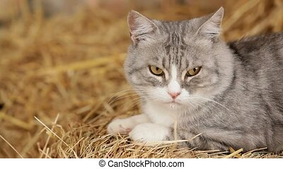Grey Cat Monitoring Territory - Cat like a king is on a...