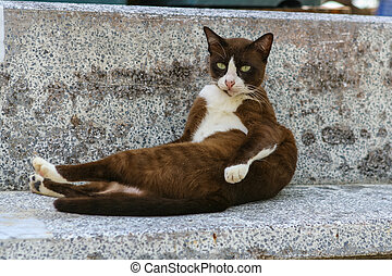 Cat on the bench - Brown and whit cat on the stone grey...