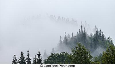 Misty morning in the Carpathians The Ukraine