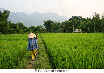 Vietnam - Paddy field and farmer in Vietnam