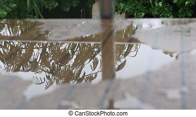Trees reflecting in rain water on the table
