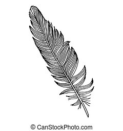black fether on simple white background - writing feather-...