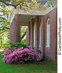 Azaleas at the St James Santee Epi - A photograph of...
