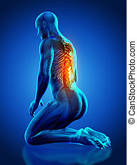 3D male medical figure with spine highlighted in kneeling position