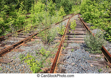 old thrown railroad which has grown with trees