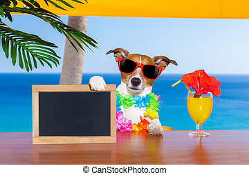 cocktail dog - jack russell dog with a summer cocktail...