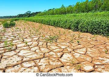 Cracked Earth and Lush Foliage - Dry cracked earth next to...